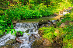Forest stream  splashes on the rock cascade. Narrow forest stream runs along the ferns, water splashes on the rocks near the cascade Royalty Free Stock Images