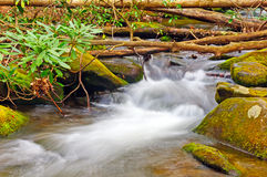 A Forest Stream in Spring Royalty Free Stock Photos