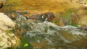 Forest stream, the stones stock footage