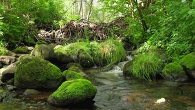 Forest stream, the stones stock video