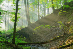 Forest stream. With sun rays Stock Image
