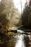 Forest Stream Sun Rays Fotos de Stock Royalty Free