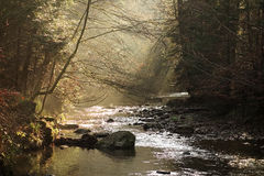 Forest Stream Sun Rays Stock Photography