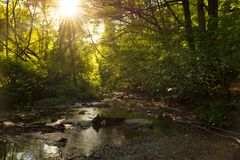 Forest stream with sunlight Royalty Free Stock Image