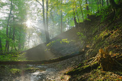 Forest stream with sunrays. In the morning Stock Photography