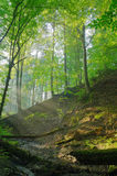 Forest stream with sunrays. In the morning Royalty Free Stock Image