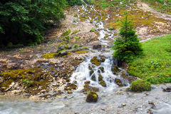 Forest stream surrounded by vegetation running Stock Photo