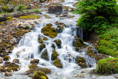 Forest stream surrounded by vegetation Stock Photo