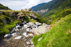 Forest stream surrounded by vegetation Royalty Free Stock Photos