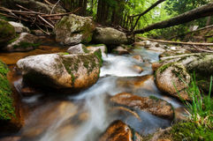 Forest stream Royalty Free Stock Image