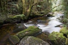 Forest Stream Tasmania tranquillo immagini stock