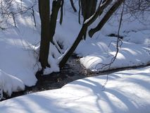 Forest stream among trees in winter royalty free stock images