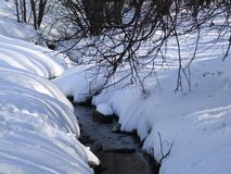 Forest stream among trees in winter royalty free stock photo