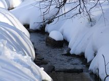 Forest stream among trees in winter stock images