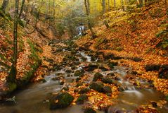 Forest stream in Turkey. Forest stream in Seven Lakes National Park of Bolu province, Turkey Royalty Free Stock Photography