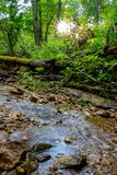 Forest stream among vegetation royalty free stock image