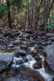 Forest Stream. Vertical Composition Of Small Forest Stream Cascading Along Boulder Strewn Channel Royalty Free Stock Photography