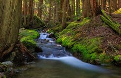 Forest Stream, Washington State royalty free stock photography
