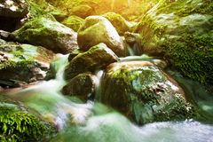Forest stream with a waterfall Royalty Free Stock Images
