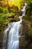 Forest stream waterfall Stock Image