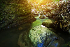 Forest stream with a waterfall and rocks Stock Images