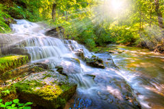 Forest stream and waterfall Royalty Free Stock Images