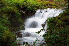 Forest stream waterfall surrounded by vegetation running Stock Images