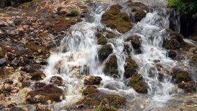 Forest stream waterfall surrounded by vegetation stock footage
