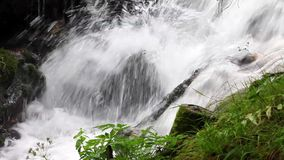 Forest stream waterfall surrounded by vegetation stock video