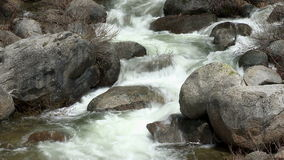 Forest Stream stock footage