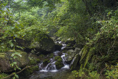 Forest streams Royalty Free Stock Photo
