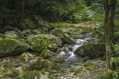 Forest streams Royalty Free Stock Photography