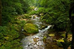 The forest streams Royalty Free Stock Images