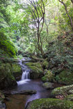 The forest streams and waterfalls Stock Photos