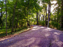 Forest street Royalty Free Stock Photo