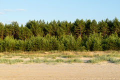 Forest strip on the beach. With trees Stock Image