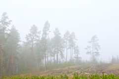 Forest in a strong fog Royalty Free Stock Photography