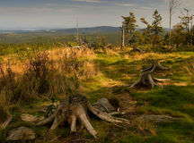 Forest with stumps Stock Images
