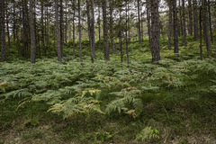 Forest in the summer Royalty Free Stock Photo