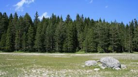 Forest at summer. Spring forest background (Durmitor national park, Montenegro Stock Image
