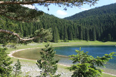 Forest at summer. Summer forest background (Durmitor national park, Montenegro Stock Image