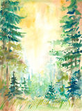 Forest in summer Royalty Free Stock Images