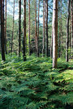 Forest. Summer forest in all its charm Stock Photography
