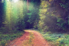 Forest in summer Stock Photo