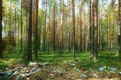 Forest in summer Royalty Free Stock Photo