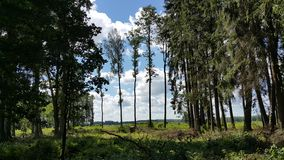 Forest in the summer royalty free stock photography