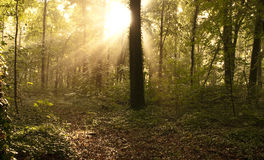 Forest after summer rain. Sunlight in a forest after a summer rain Stock Photo