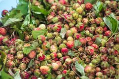 Forest summer red wild sweet strawberries berries background macro Stock Photo