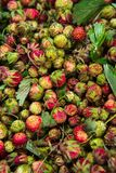 Forest summer red wild sweet strawberries berries background macro Stock Images