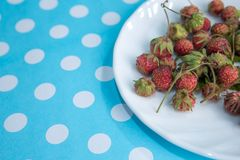 Forest summer red wild sweet strawberries berries background macro Royalty Free Stock Photos